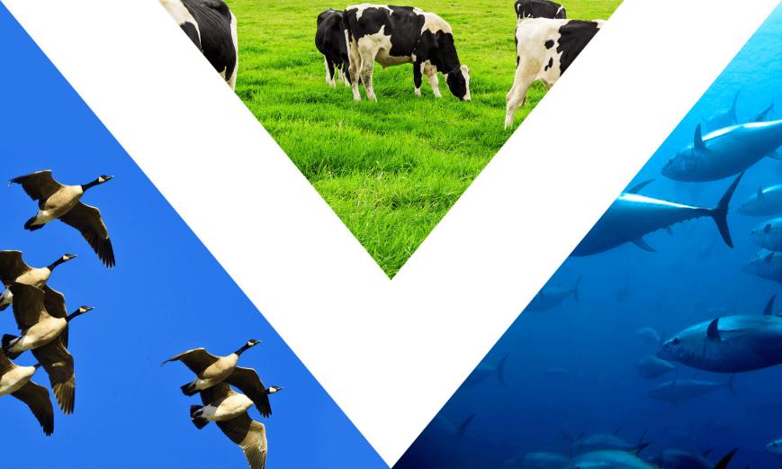 bandeira_vegana