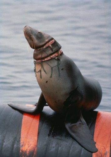 foca_pesca