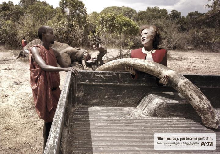 peta_campaign_elephant_new_aotw