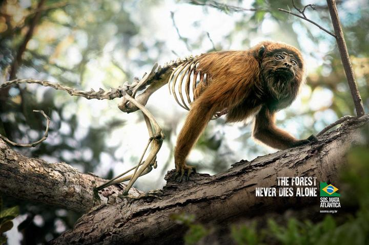 the_forest_never_dies_alone_monkey_dpzt
