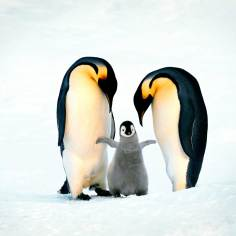 amazing-moms-penguins